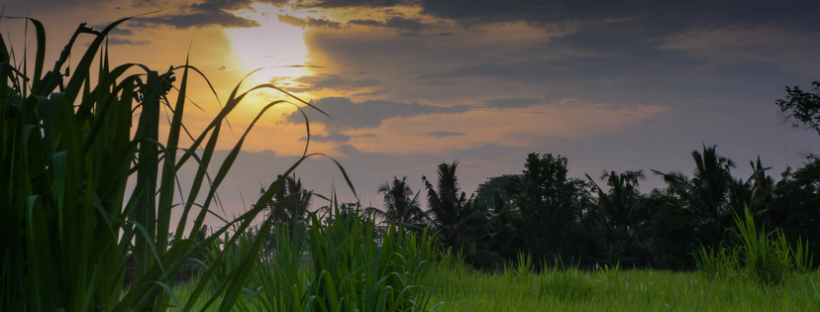 20 tips for holidaying in bali