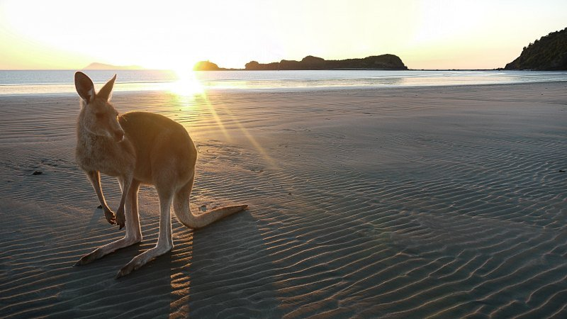 Family Friendly Accommodation In Sunshine Coast and North Queensland